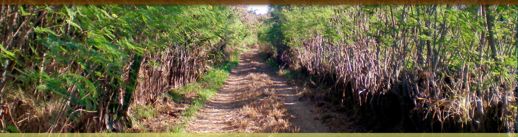 Historic Hapa Trail Walk - Koloa Plantation Days, Kauai, Hawaii